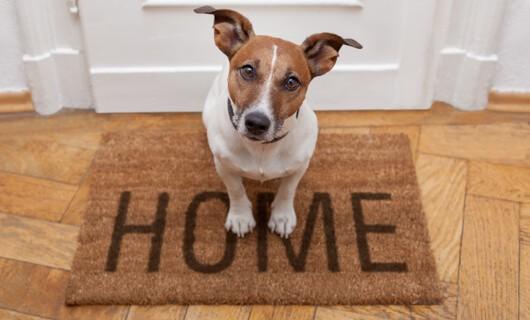 Pet on doormat | The Carpet Stop