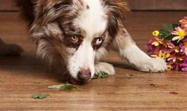 Pet on floor | The Carpet Stop